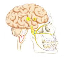 神経との関係
